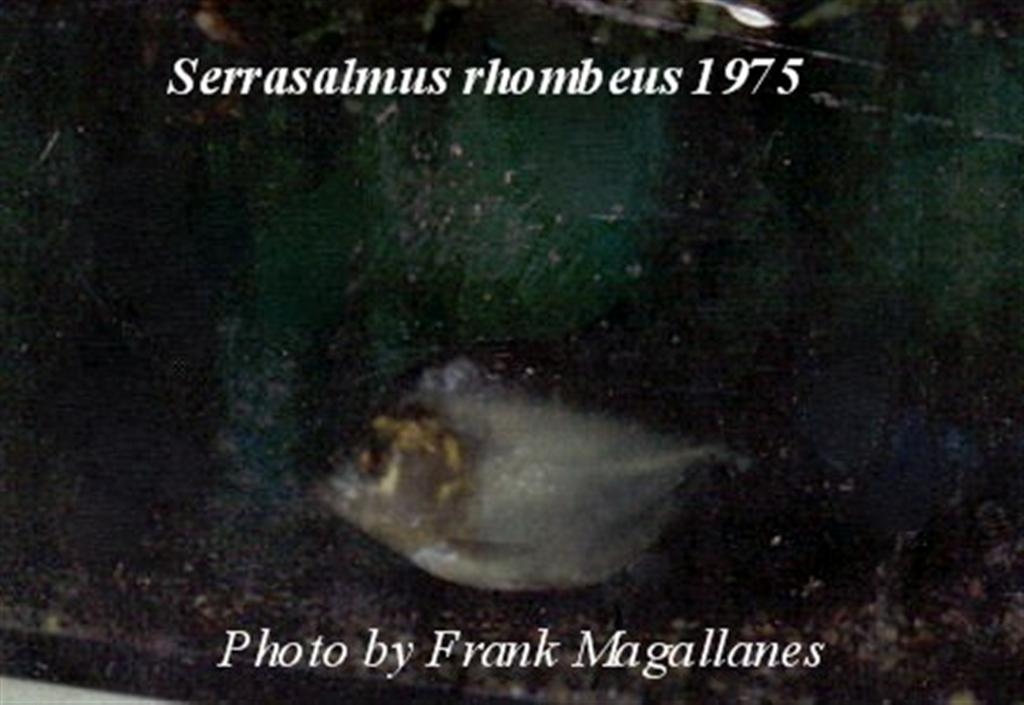 The actual photograph of the fish I bought in 1975