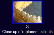 Property of OPEFE. Closeup of replacement teeth.