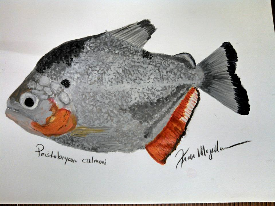 water color painting not for sale. Pristobrycon calmoni. By Frank Magallanes